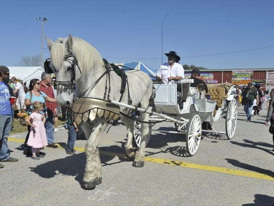 Horse-drawn carriages offered rides to festival goers Saturday at the Gulf Coast Renaissance Faire and Pirate Festival.