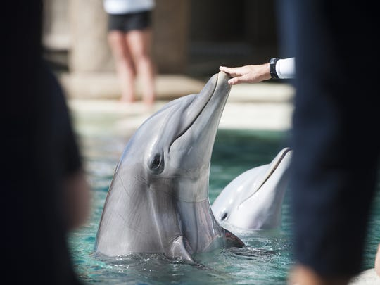 Dolphins greet their trainers at Dolphinaris Arizona