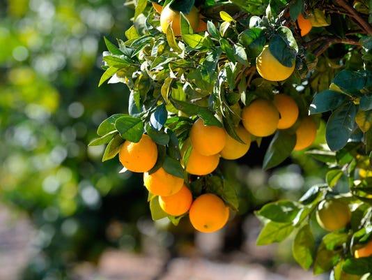 orange-gil.JPG