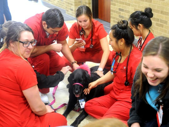 Members of Hendrick's Pet Enhanced Therapy Services, or PETS, program visit with students from the Texas Tech University Health Sciences Center School of Nursing. The therapy dogs were helping the students de-stress Tuesday before finals.