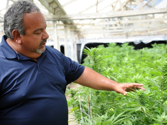 Owner Mike Hackett with some of the cannabis plants Riverview Farms is growing in Salinas, CA.