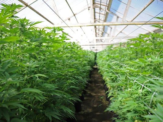 636295196345432982-170504-jd-cannabis03.jpg