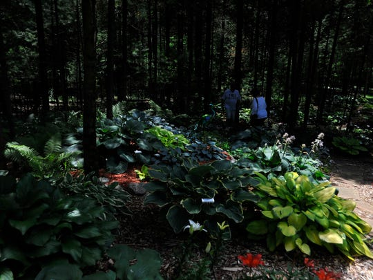 Paul and Chari Seebruck, of Grand Rapids, have more than 20 varieties of hostas in their gardens.