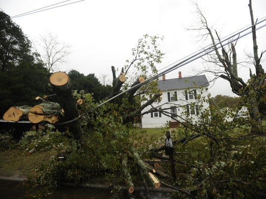 A fallen tree rests against power lines in front of