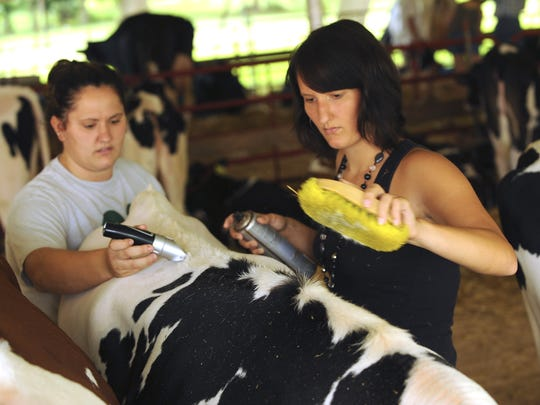 Tractors, animals, and water fights make up the essence of the Alto Fair.