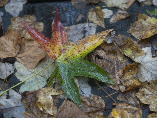 Fall colors will soon appear at the Rancocas Nature