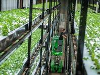 Minnesota: Sustainable indoor vertical farming in action