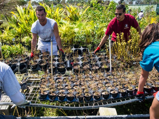 Volunteers help at the Naples Botanical Gardens on Sunday, Sept. 17, 2017.