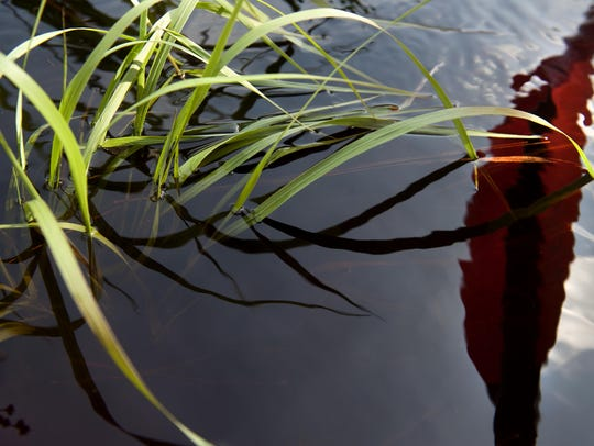 A kayak paddle is reflected in the water where reeds