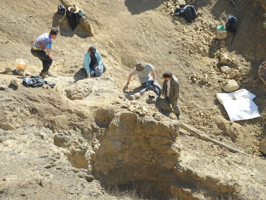 A crew works to unearth the bones of a sirenian, or sea cow, that was discovered on Santa Rosa Island. The bones were covered with plaster and burlap to protect them over the winter months.