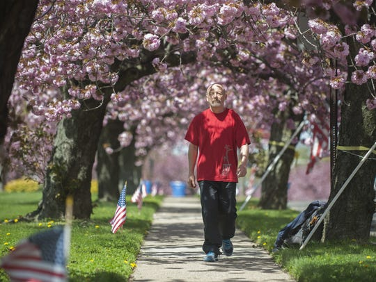 With cherry blossoms in bloom, Tom Krupa of Berlin walks down Chapel Avenue in Cherry Hill in 2015.