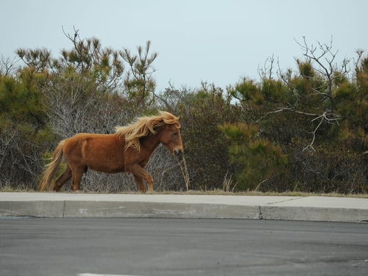636601741036225182-20180424-MR-Assateague-6.jpg