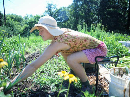 Lucy Nelson harvests leeks on a Tuesday morning in
