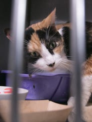 One of a number of cats now housed at the Livingston