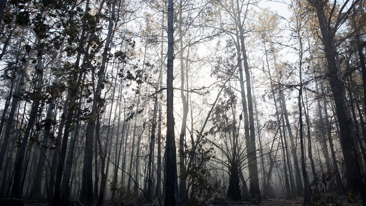 Florida Forest Service specialist provides update on brush fire