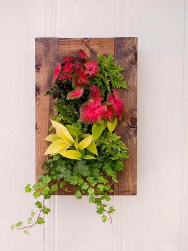 Vertical gardens -- plants or gardens planted in containers