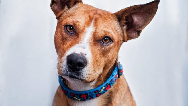 Clarence the dog is up for adoption.