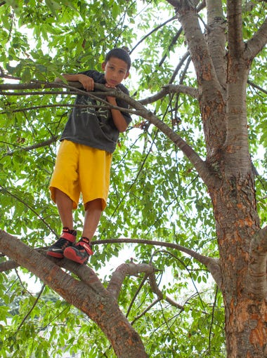 Nichols Nettles, 10, looks down from a tree after climbing into the foliage outside The Valley Mission on Aug. 8, 2015.