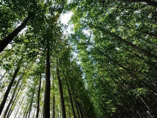 Woods trees.jpg