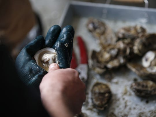 Oysters from TCC's aquaculture studies program are shucked Monday for guests at the opening of the college's new Wakulla Environmental Institute facility off of Crawfordville Highway.
