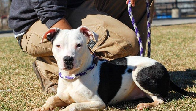 This is one of four dogs available for adoption at the Animal Rescue League of Iowa after being seized from a Warren County woman.