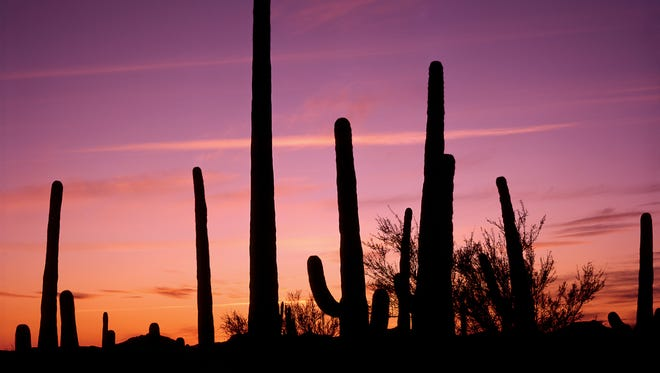 Tucson is known for their lavish colorful sunsets.