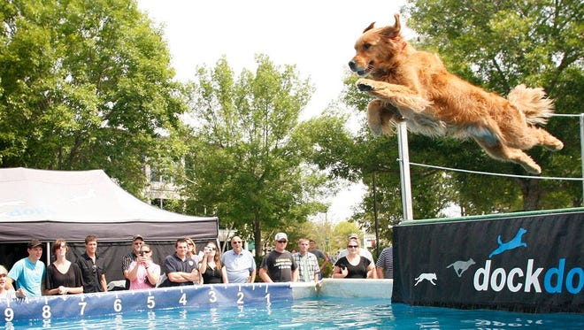 An aquatic dog jumping competition, DockDogs, will take place throughout the weekend at the Sheboygan County Fair.