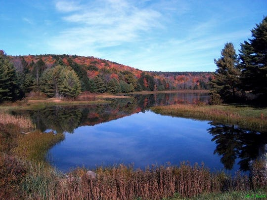 Hawkins Pond Nature Reserve in Windsor has four miles of nature trails.