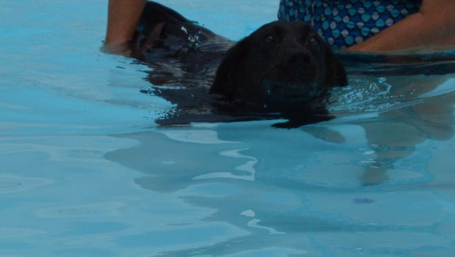 Lucy from the UC Dog pound having fun in the water.