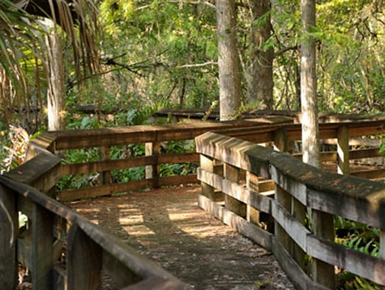 The long boardwalk through Barley Barber Swamp.