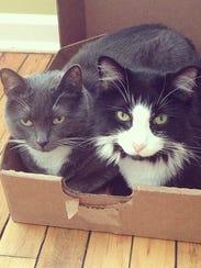 Leslie's Cats