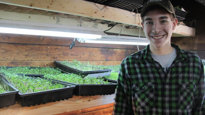 Andrew Cassata, 17, inside the microgreens grow room at Twin Hill Farms on Peck Road in Spencerport.