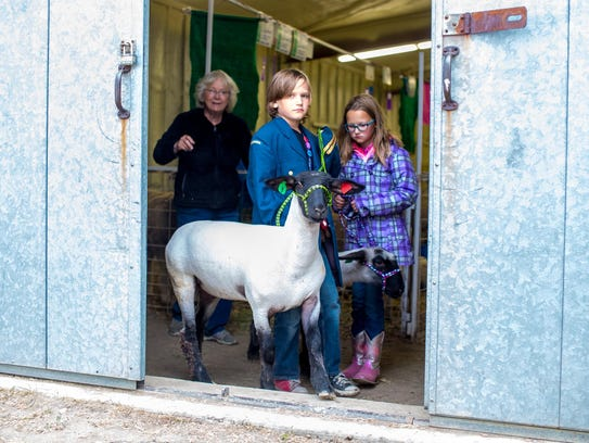 Aden Lunn and his sister, Reece, lead their sheep out