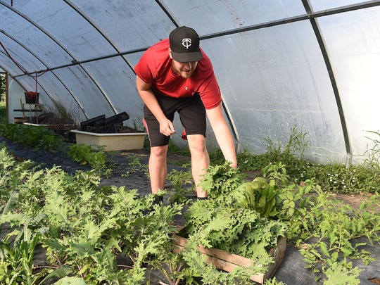 Coloradoan Eat + Drink reporter Jake Laxen picks kale at Shire CSA on Thursday, June 9, 2016.