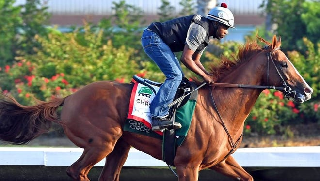 California Chrome working out at his home base at Los Alamitos Race Course.