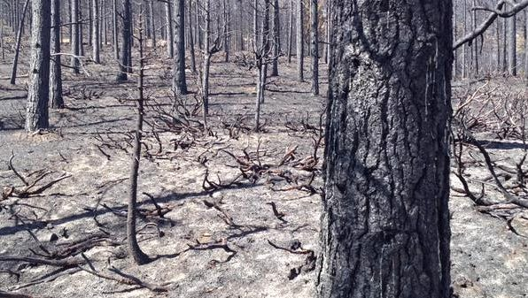 This photos shows a portion of the Lake Fire's northwestern burn area. As of Tuesday, It's burned 31,359 acres and was 98 percent contained.