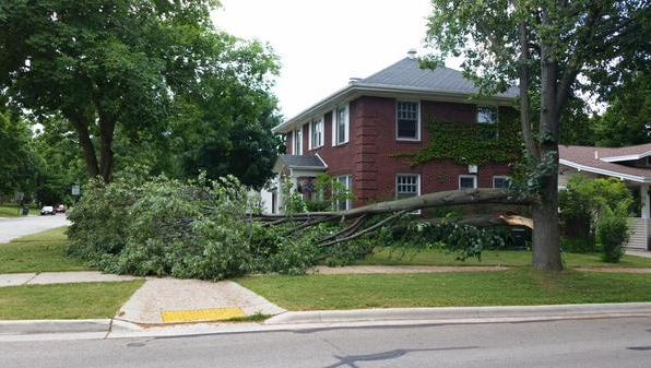 Part of tree down at Grignon and South Quincy streets in Green Bay after Monday morning's storm.