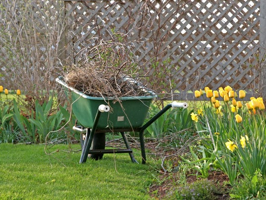 Wheelbarrow full of twigs on grass next to yellow tulips