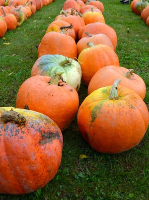 The Sara Haylett-Jones Memorial Fund Fall Harvest fundraiser takes place Saturday and Sunday on South Angola Road.