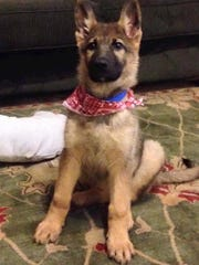 Nine-week-old Rose, a German shepherd, was reunited with her Starkville family after a nasty wreck.