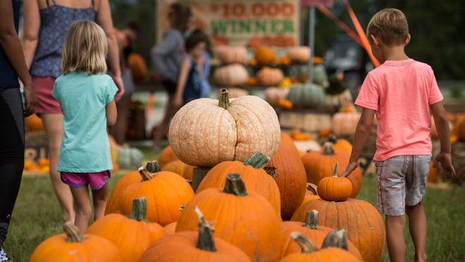 Families peruse pumpkins at the Palm City Pumpkin Patch on Sunday, Oct. 15, 2017, at the corner of Southwest Citrus Boulevard and Southwest Martin Highway in Palm City. The event is being held to help raise funds for a planned large-scale production garden, which will provide healthy food for House of Hope to assist Martin County residents in need, on land where Palm City Farms Produce & Market is building its new structure slated to open this winter.