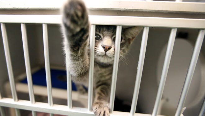 """Kiwi"" reaches for the camera while waiting to be adopted during the one-day free pet adoption event at Rochester Animal Services. By midday most of the dogs had been adopted and just a handful of cats were left."