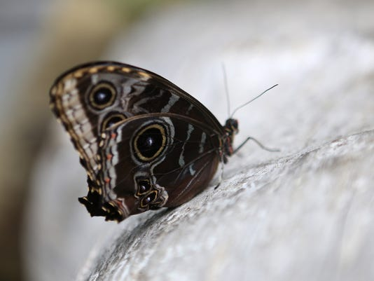 butterflyshow 2.jpg