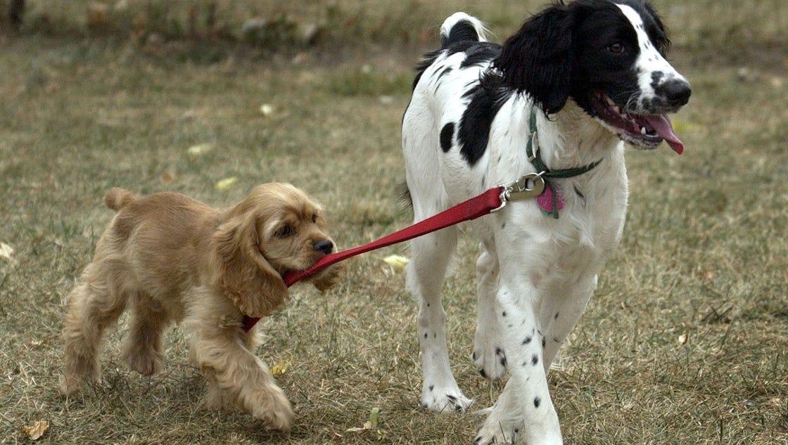 Washington State Parks Dogs