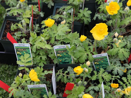 Native plants  will be on sale at the Native Plant