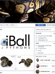 The facebook page for iBall Pythons, a snake breeding