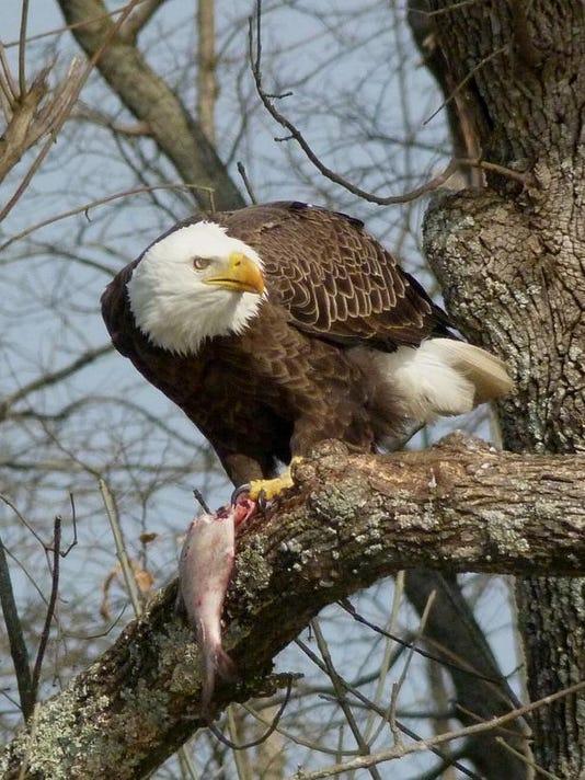lead eagle 1.jpg