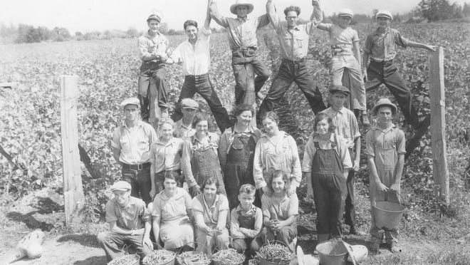 Picking beans was a Mid-Valley tradition for people of all ages. This photo likely dates to the 1930s.