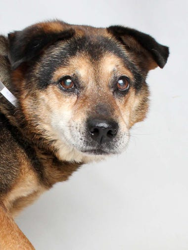 Shamus is a 10-year-old senior pet who loves to snuggle