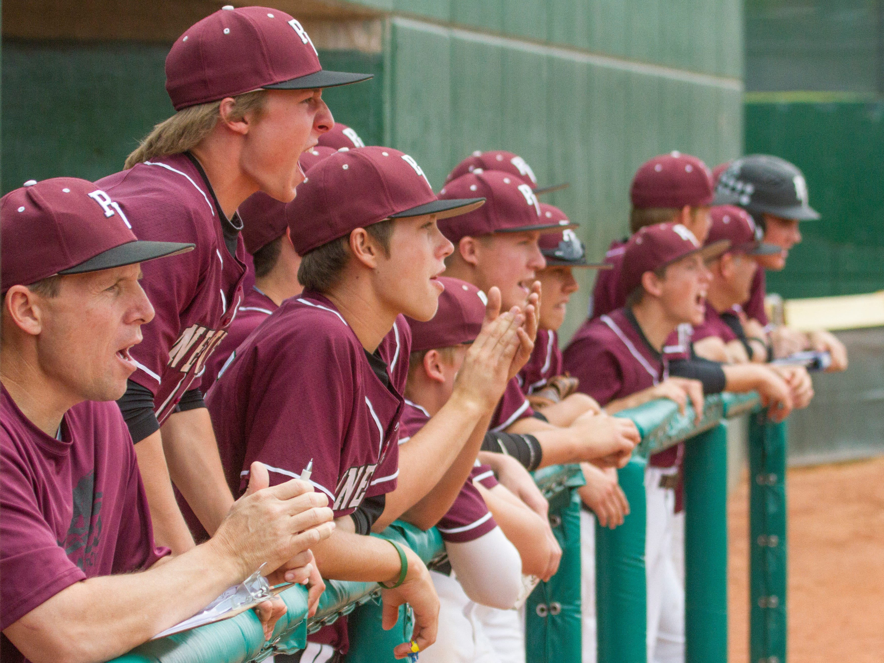 Pine View players cheer from the dugout against Carbon on Thursday.
